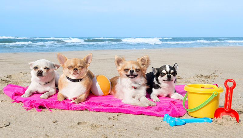 Find pet-friendly events probably ranks high on your vacation planning to-do list